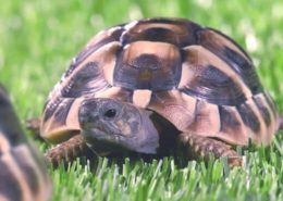 clearscore uk television tv commercial tortoise grass voiceover